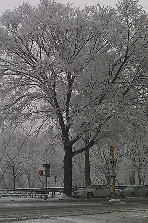 NYC Snow12